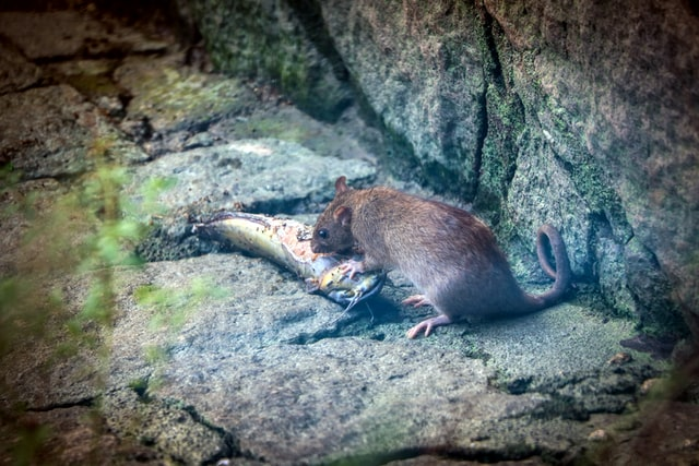prevenir-ratas-edificios-megaservice