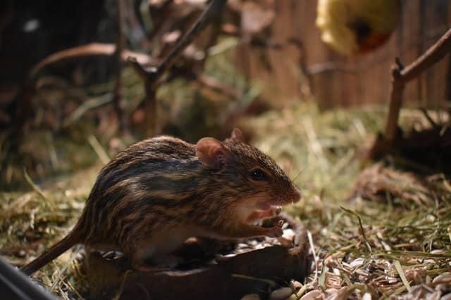 prevenir-ratas-edificios-megaservice-madrid